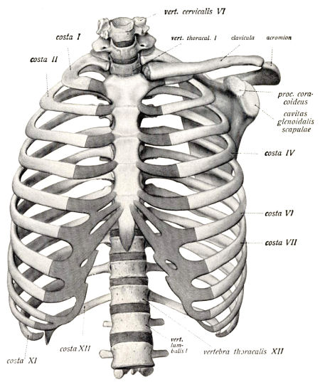 Classic Chiropractic Definition Of Spinal Terms